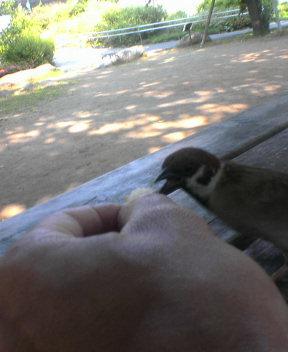 今日の雀その2