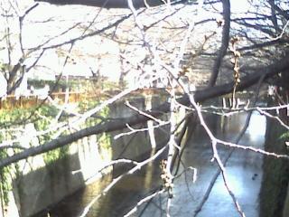 今日の一枚桜
