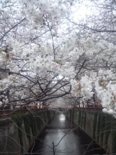 目黒川桜橋からの