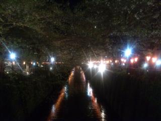 今日の目黒川の桜